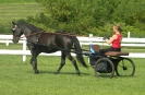 Brook Hill Driving Mares