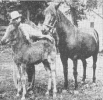 Lippitt Prefixed Mares with Foals